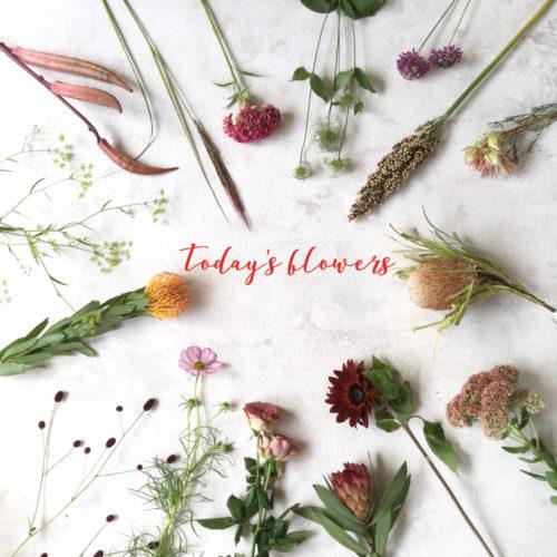*今週のお花達