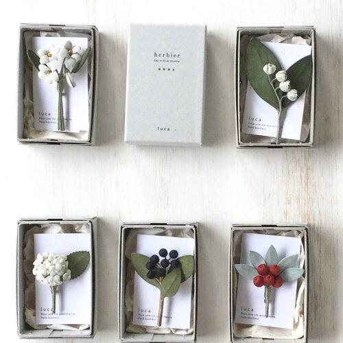 *lucaより植物標本シリーズが届きました